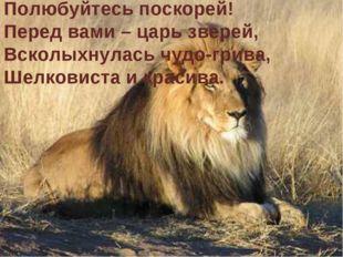 Полюбуйтесь поскорей! Перед вами – царь зверей, Всколыхнулась чудо-грива, Шел