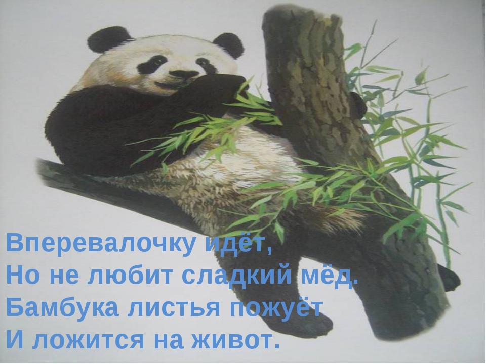 Вперевалочку идёт, Но не любит сладкий мёд. Бамбука листья пожуёт И ложится н...