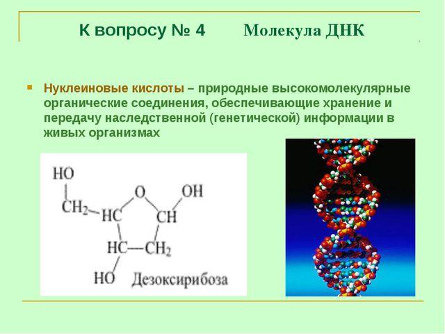 К вопросу № 4 Молекула ДНК Нуклеиновые кислоты – природные высокомолекулярные...