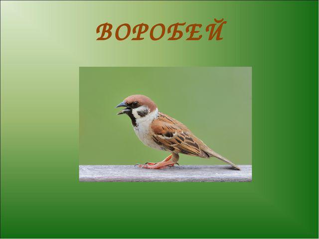 ВОРОБЕЙ 520 x 520