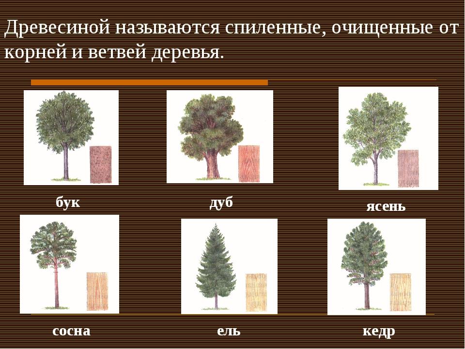 Древесиной называются спиленные, очищенные от корней и ветвей деревья. бук ду...