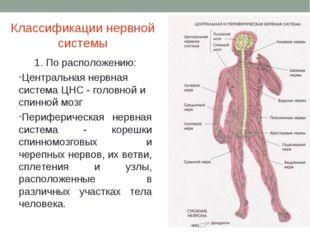 Классификации нервной системы 1. По расположению: Центральная нервная система