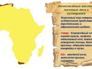 Животный мир северных субтропиков представлен европейскими и африканскими вид