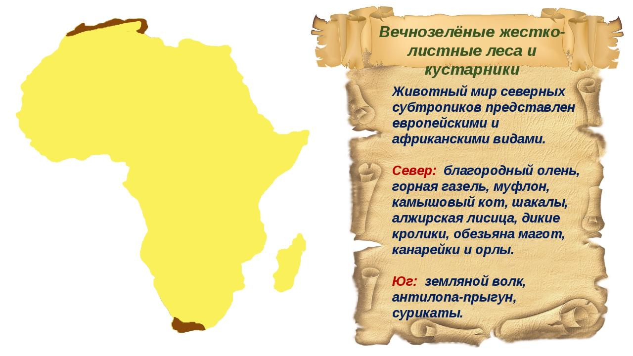 Животный мир северных субтропиков представлен европейскими и африканскими вид...