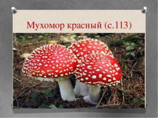 Мухомор красный (с.113)