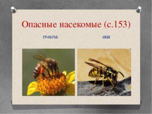 Опасные насекомые (с.153) пчела оса
