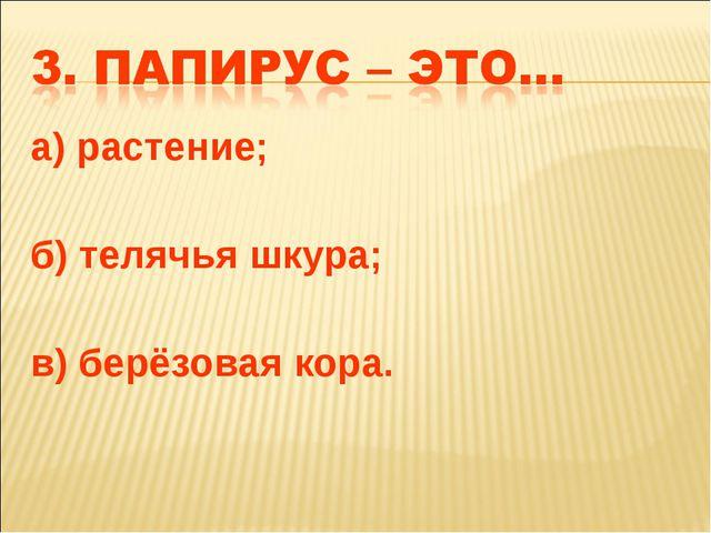 а) растение; б) телячья шкура; в) берёзовая кора.