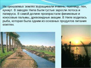 На орошаемых землях выращивали ячмень, пшеницу, лен, кунжут. В заводях Нила б