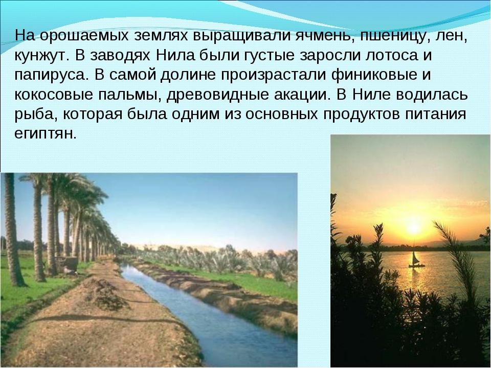 На орошаемых землях выращивали ячмень, пшеницу, лен, кунжут. В заводях Нила б...