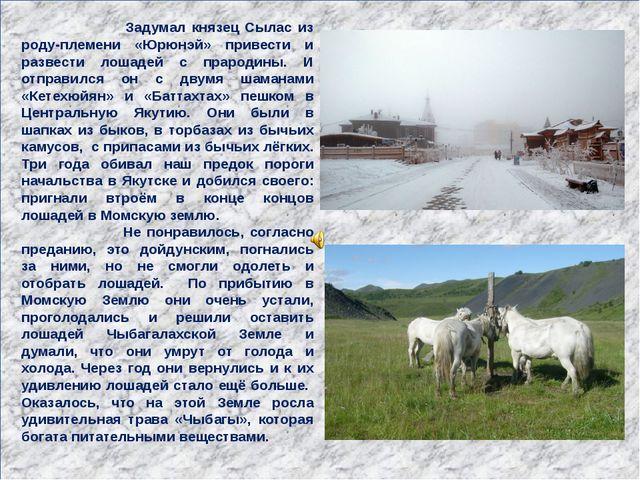 Задумал князец Сылас из роду-племени «Юрюнэй» привести и развести лошадей с...