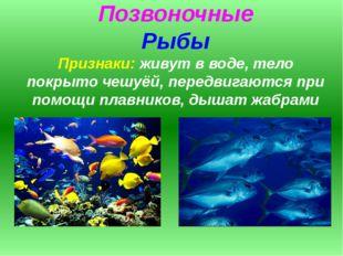 Позвоночные Рыбы Признаки: живут в воде, тело покрыто чешуёй, передвигаются п