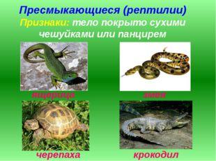 Пресмыкающиеся (рептилии) Признаки: тело покрыто сухими чешуйками или панцире