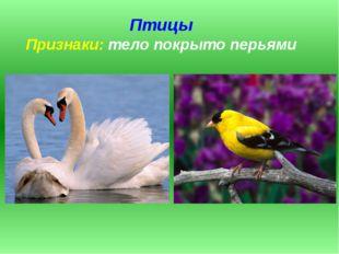 Птицы Признаки: тело покрыто перьями
