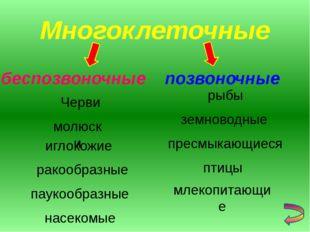 Многоклеточные беспозвоночные позвоночные иглокожие ракообразные паукообразны