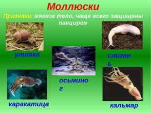 Моллюски Признаки: мягкое тело, чаще всего защищены панцирем улитка слизень о