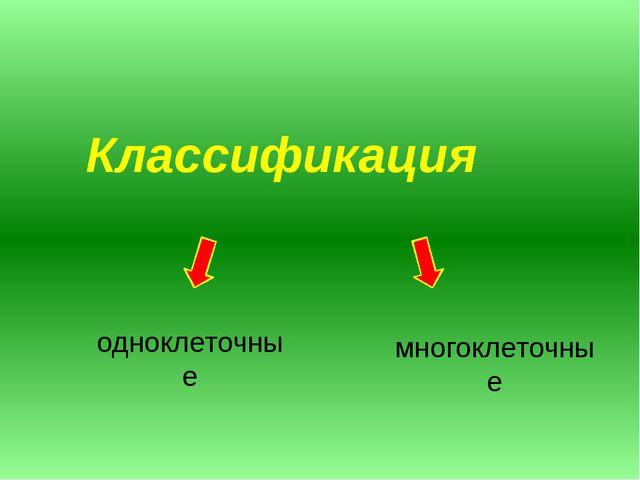 Классификация одноклеточные многоклеточные
