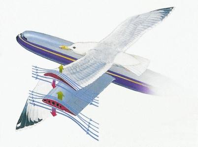 Давление на крылья птиц при полёте какие телогреи
