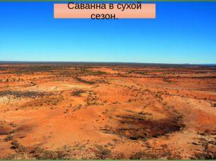 Австралия. Саванны и редколесья Почему зона саванн имеет такое расположение н