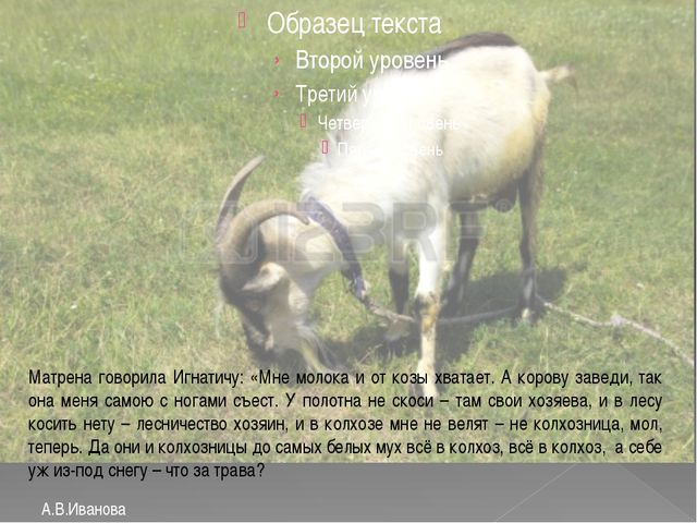 А.В.Иванова Матрена говорила Игнатичу: «Мне молока и от козы хватает. А коро...