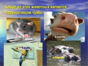 Какое из этих животных является переносчиком чумы человека? 1.крыса 2.корова