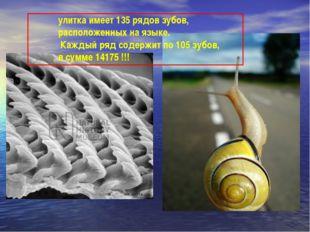 улитка имеет 135 рядов зубов, расположенных на языке. Каждый ряд содержит по