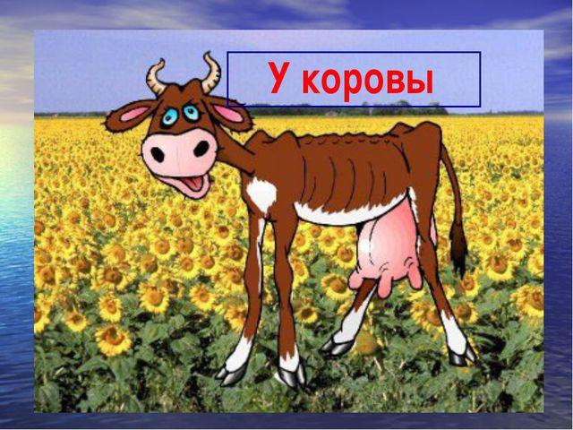 У коровы