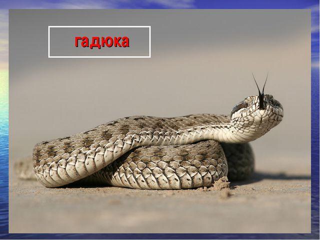 гадюка