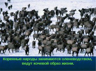 Коренные народы занимаются оленеводством, ведут кочевой образ жизни.