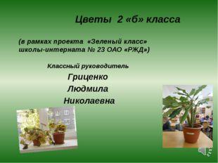 Цветы 2 «б» класса (в рамках проекта «Зеленый класс» школы-интерната № 23 ОА