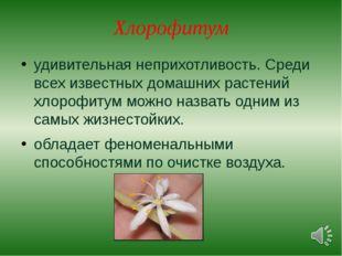 Хлорофитум удивительная неприхотливость. Среди всех известных домашних растен