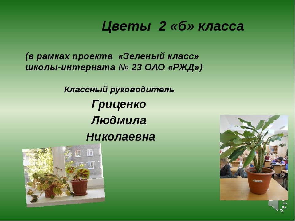 Цветы 2 «б» класса (в рамках проекта «Зеленый класс» школы-интерната № 23 ОА...