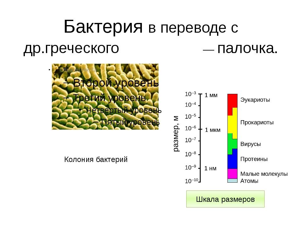 Бактерия в переводе с др.греческого βακτήριον— палочка. Колония бактерий Шкал...