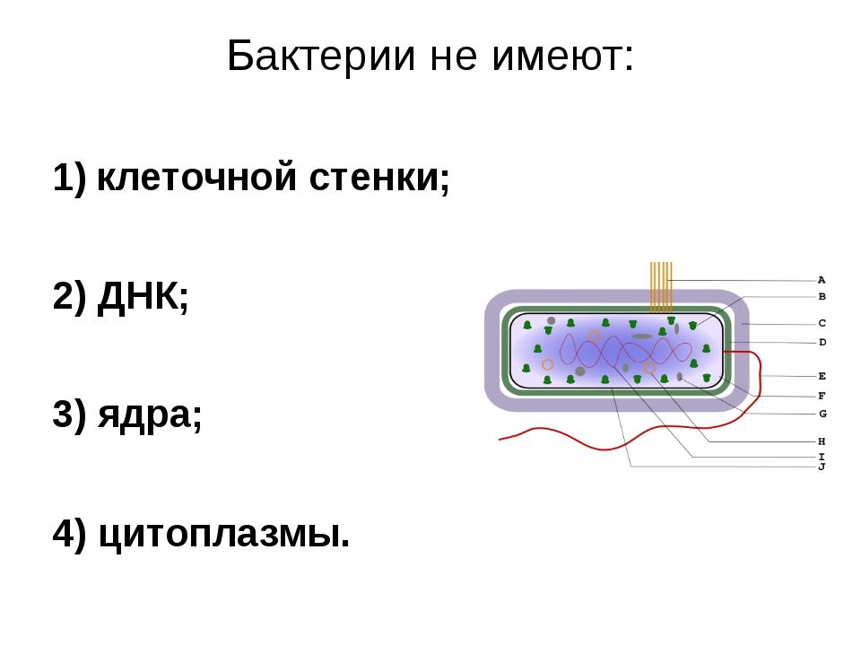 Бактерии не имеют: клеточной стенки; 2) ДНК; 3) ядра; 4) цитоплазмы.