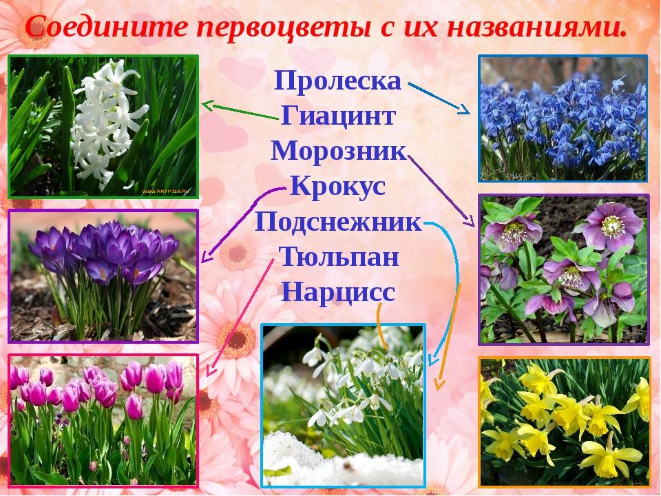 весенние первоцветы картинки с названиями для детей это