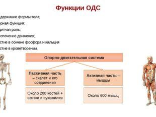 Функции ОДС Поддержание формы тела; Опорная функция; Защитная роль; Обеспечен