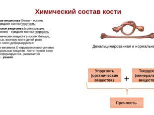Химический состав кости Органические вещества (белки – оссеин, коллаген)– при