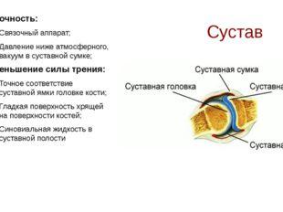 Сустав Прочность: Связочный аппарат; Давление ниже атмосферного, вакуум в сус