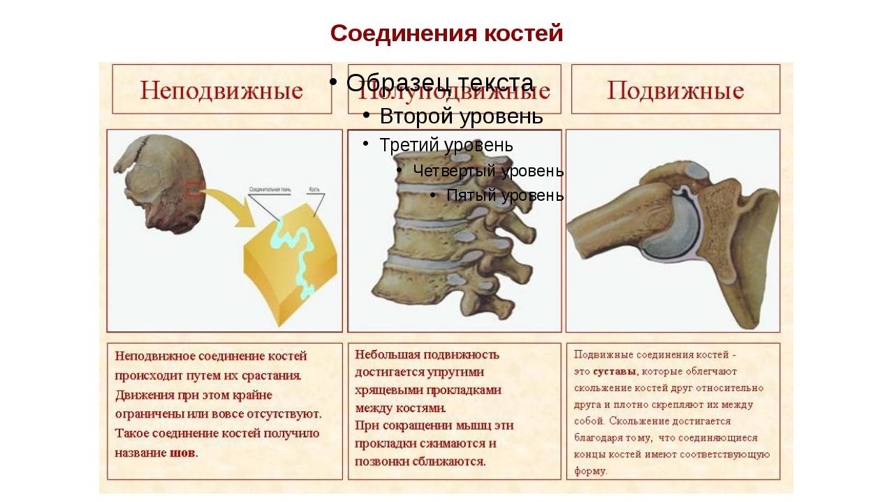 Соединения костей