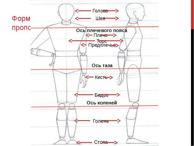 Формообразование и идеальные пропорции фигуры человека Ось плечевого пояса Ос...