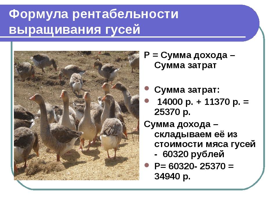 Формула рентабельности выращивания гусей Р = Сумма дохода – Сумма затрат Сумм...