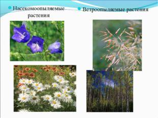 Насекомоопыляемые растения Ветроопыляемые растения
