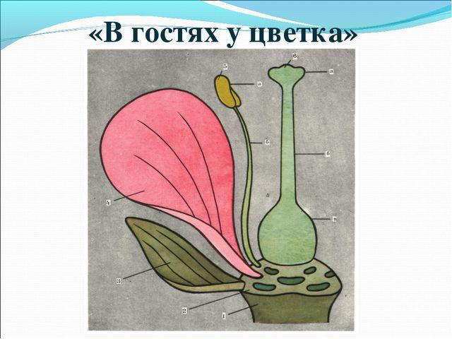 «В гостях у цветка»