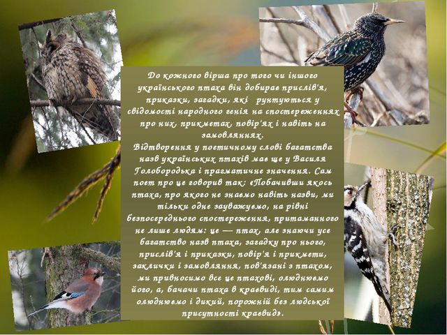 До кожного вірша про того чи іншого українського птаха він добирає прислів'я,...