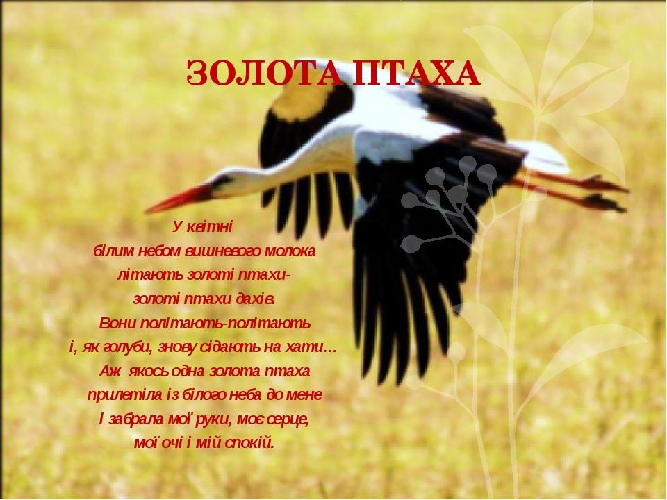 ЗОЛОТА ПТАХА У квітні білим небом вишневого молока літають золоті птахи- золо...