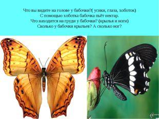 Что вы видите на голове у бабочки?( усики, глаза, хоботок) С помощью хоботка