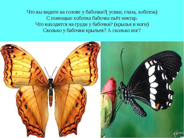 Что вы видите на голове у бабочки?( усики, глаза, хоботок) С помощью хоботка...