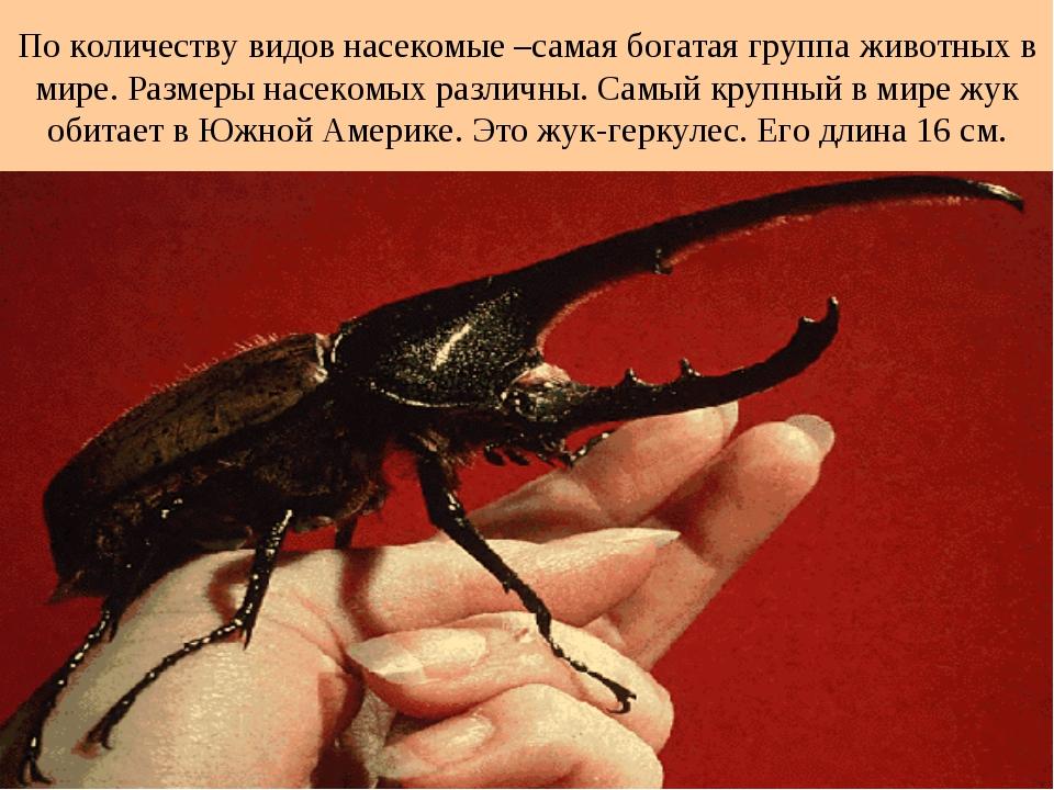 По количеству видов насекомые –самая богатая группа животных в мире. Размеры...