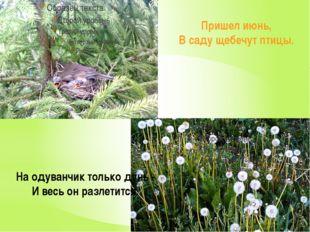 Пришел июнь, В саду щебечут птицы. На одуванчик только дунь - И весь он разл