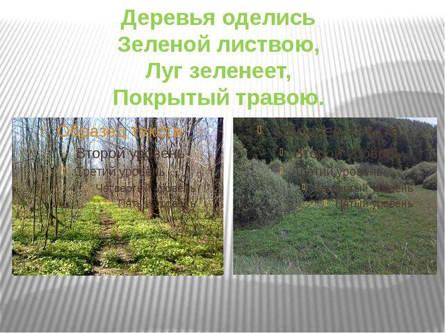 Деревья оделись Зеленой листвою, Луг зеленеет, Покрытый травою.