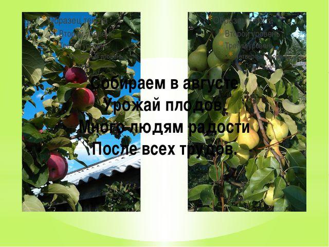 Собираем в августе Урожай плодов. Много людям радости После всех трудов.